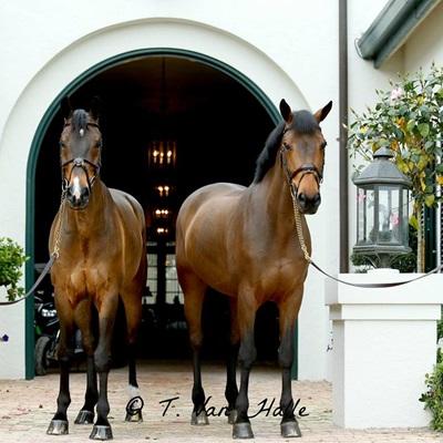 samenwonen paardenmens