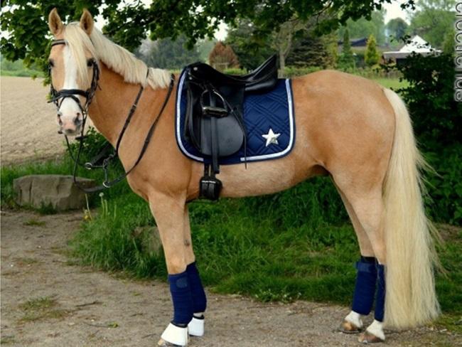 FASHION: 15x setjes inspiratie voor palominokleurige paarden