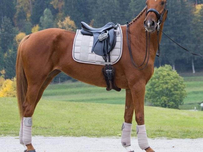 FASHION: 12x setjes inspiratie voor voskleurige paarden