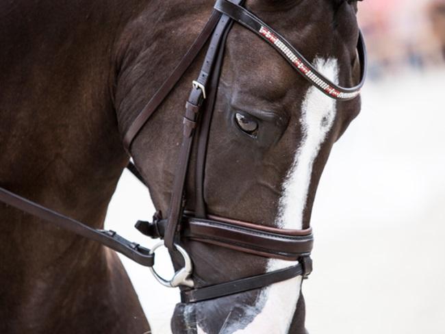 MUST SEE: Deze mooie foto's van het WK Jonge Dressuurpaarden