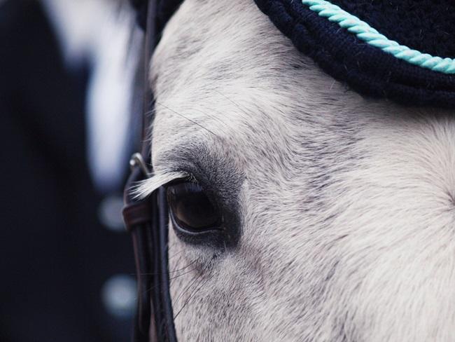 INSTRUCTIE: Met deze tips kun je je paard desensibiliseren