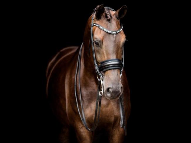HORSE SHOPPING: 9 leuke paarden die NU van jou kunnen zijn #10