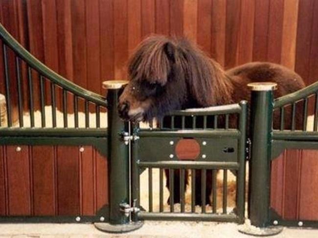 CUTE: 11x de mooiste stalletjes voor kleine paarden