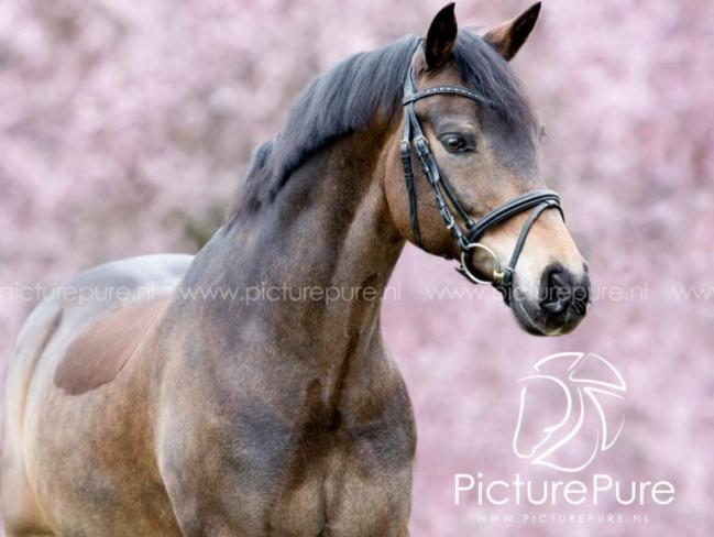 HORSE SHOPPING: 10 leuke paarden die NU van jou kunnen zijn #11