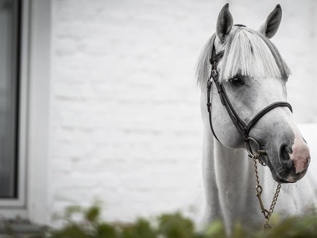 MUST READ: 7 leuke vacatures voor paardenliefhebbers