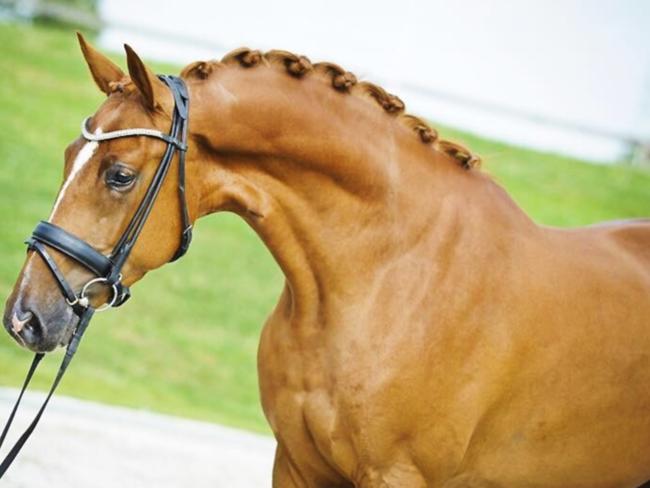 HORSE SHOPPING: 9 leuke paarden die NU van jou kunnen zijn #13