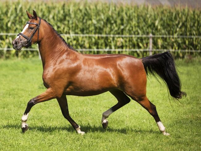 HORSE SHOPPING: 8 leuke paarden die NU van jou kunnen zijn #12