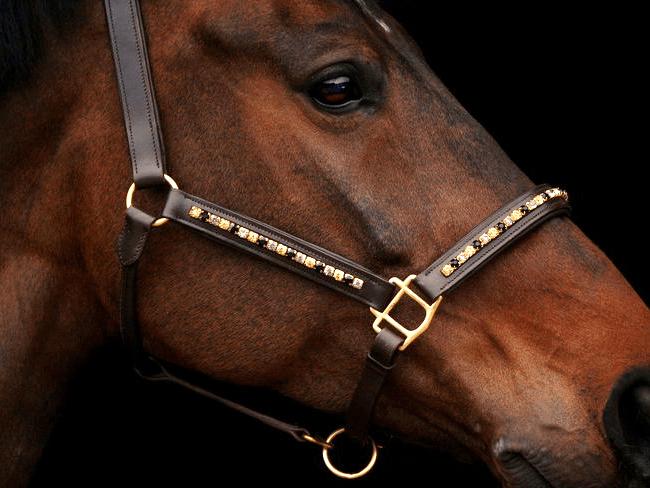 MUST READ: 11 wedstrijd essentials die ieder paardenmeisje moet hebben
