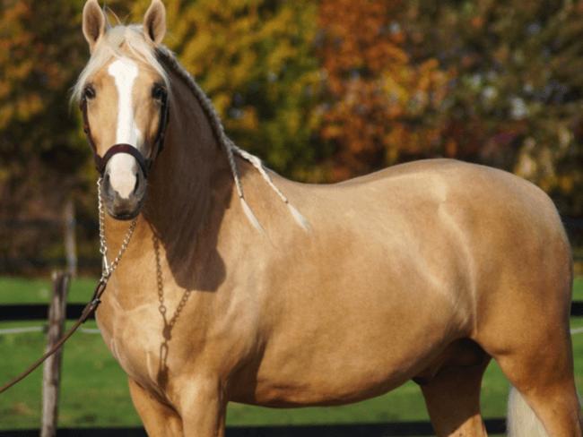 HORSE SHOPPING: 8 leuke paarden die NU van jou kunnen zijn #14