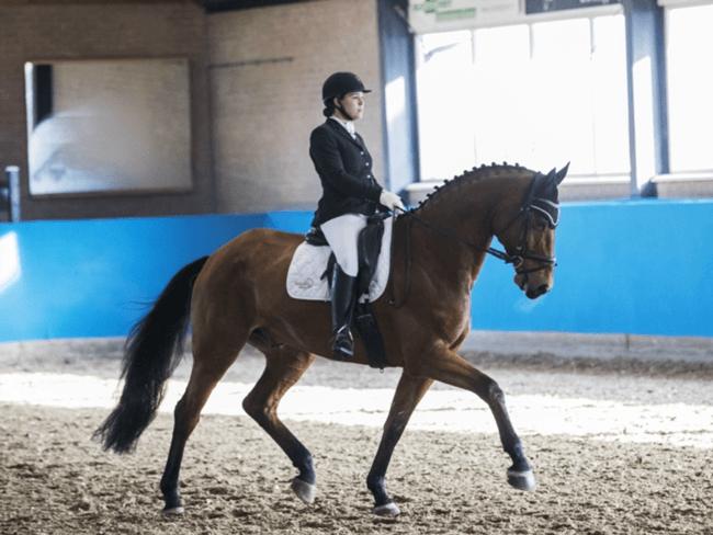 HORSE SHOPPING: 8 leuke paarden die NU van jou kunnen zijn #15