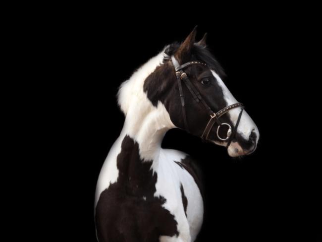 HORSE SHOPPING: 10 leuke paarden die NU van jou kunnen zijn #16