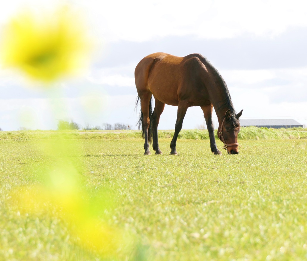 paarden pollenallergie