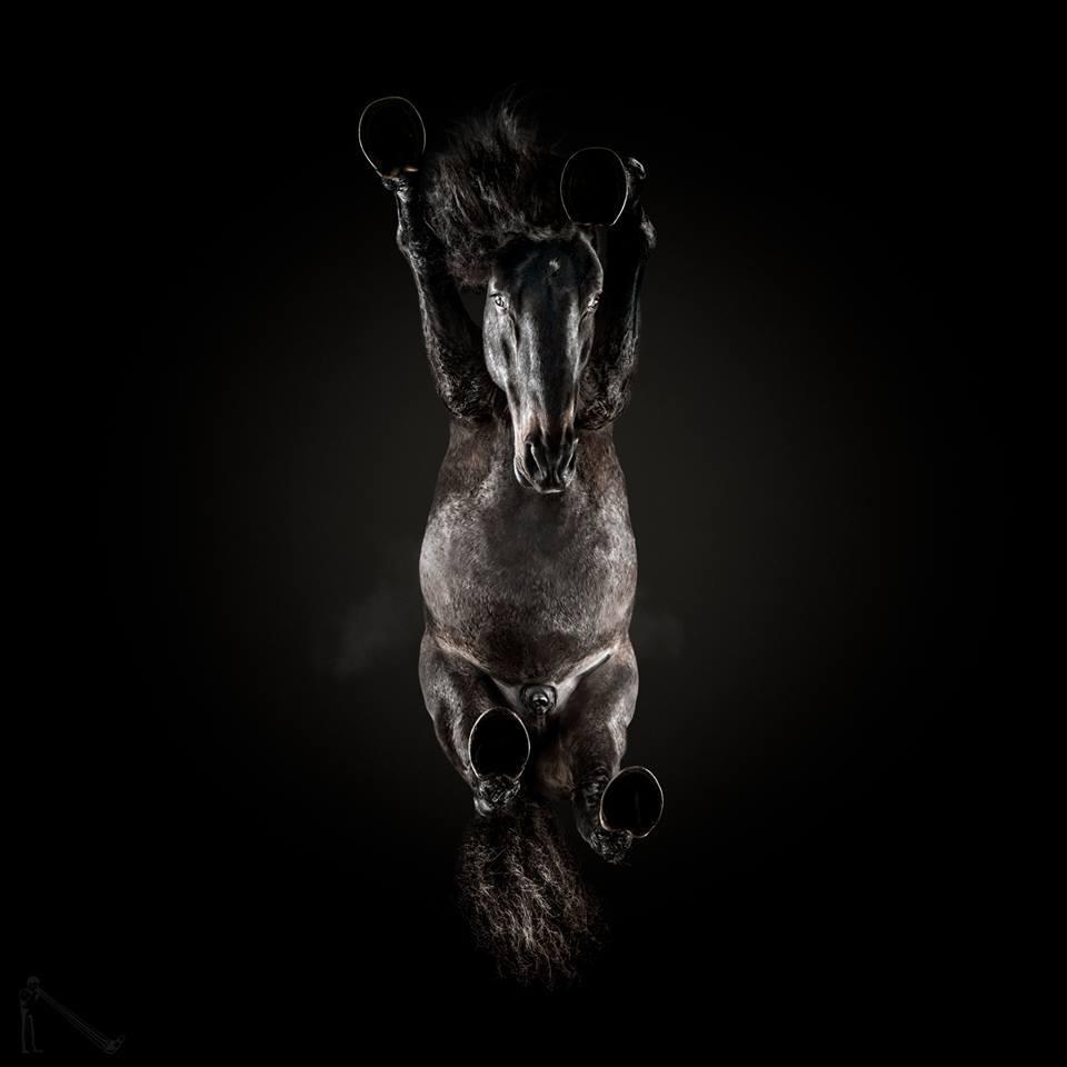 Paard van onderaf 2