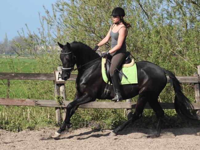 HORSE SHOPPING: 9 leuke paarden die NU van jou kunnen zijn #17