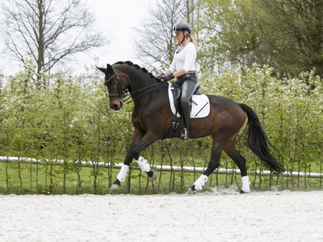 HORSE SHOPPING: 8 leuke paarden die NU van jou kunnen zijn #18