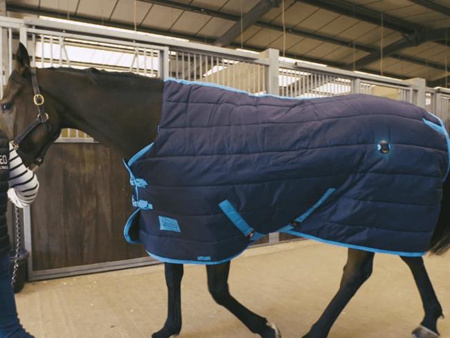 INNOVATIEF: Deze sensor meet 24/7 het welzijn van je paard