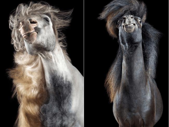 FUNNY: Deze paarden hebben meer style dan wij