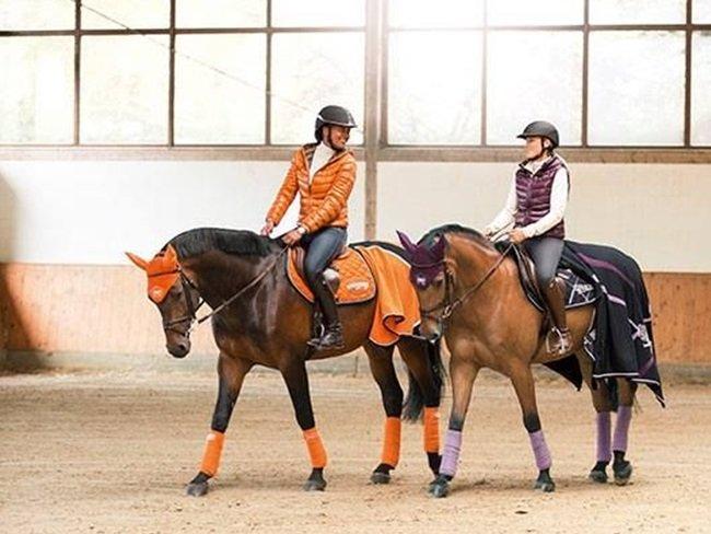 BEWEZEN: Paardenmeisjes hebben sterkere hersenen & beter geheugen