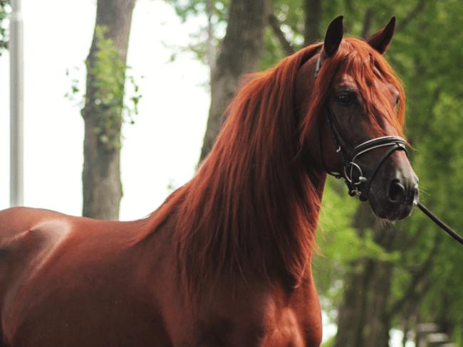 HORSE SHOPPING: 7 leuke paarden die NU van jou kunnen zijn #21