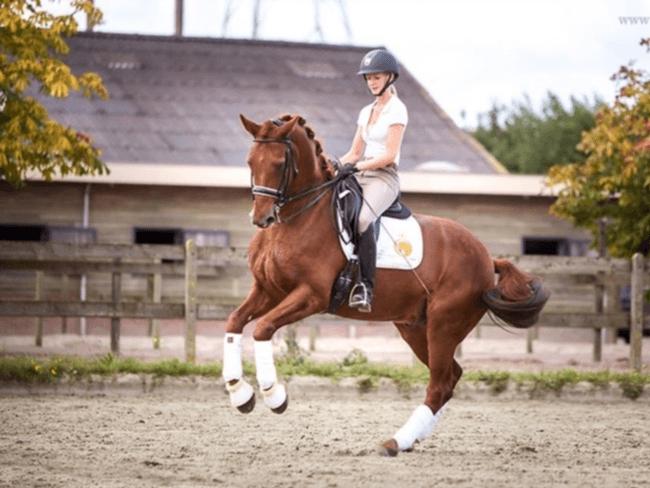 HORSE SHOPPING: 8 leuke paarden die NU van jou kunnen zijn #22