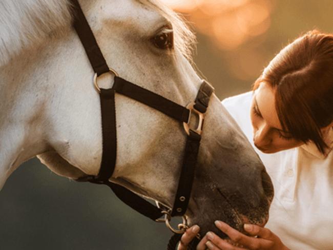 HELTIE HORSE: 100% natuurlijke supplementenlijn (+ 5 testers gezocht!)