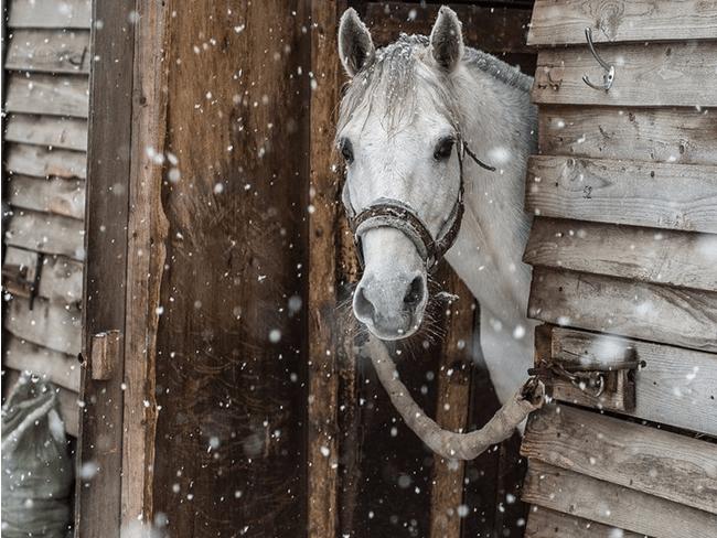 TIP: Paard met onrustige darmen en/of dunne mest? Dit product kan helpen