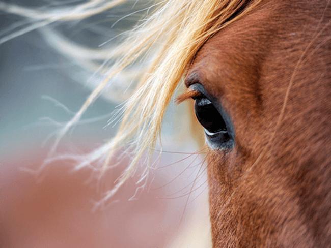 TESTERS GEZOCHT: Paarden die snel last krijgen van mijten en luizen