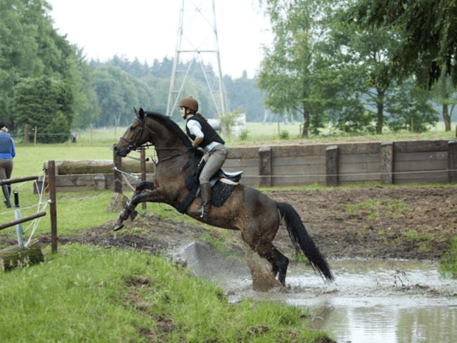 HORSE SHOPPING: 8 leuke paarden die NU van jou kunnen zijn #25