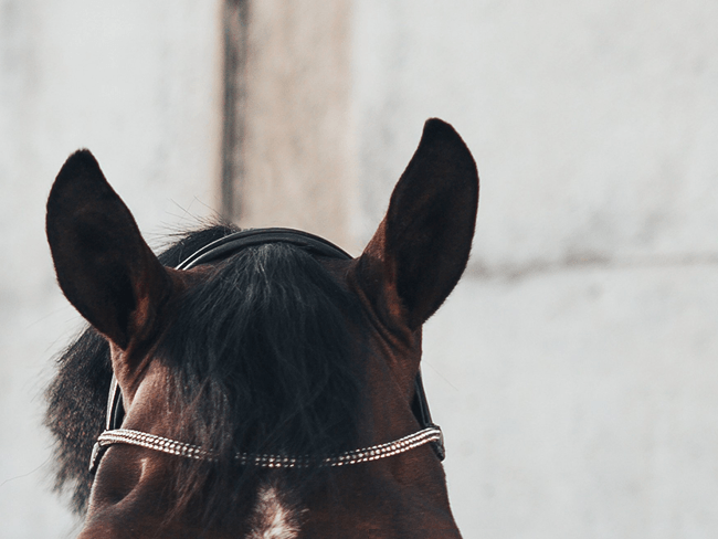 FOOD GUIDE: Als je paard veel last heeft van stress (+testers gezocht!)