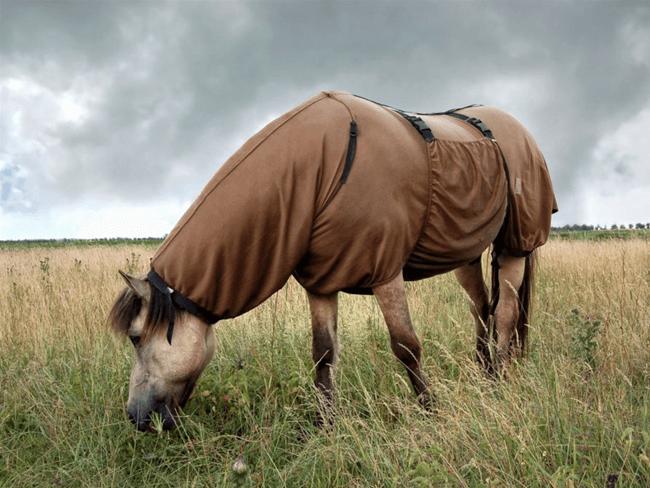 TIP: Waarom je je eczeemgevoelige paard NU moet behandelen