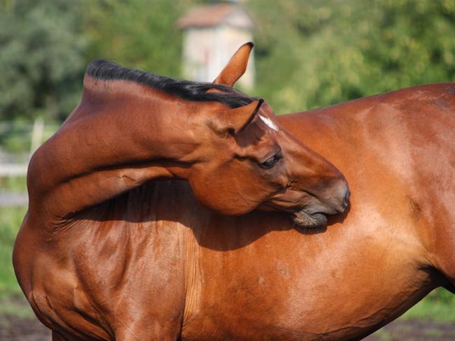 FOOD GUIDE: Hoe kies je een supplement voor je paard met darmproblemen? (+testers gezocht!)