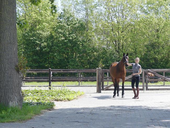 FOOD GUIDE: Geef je paard een voorjaarsschoonmaak van binnenuit (+winnen!)