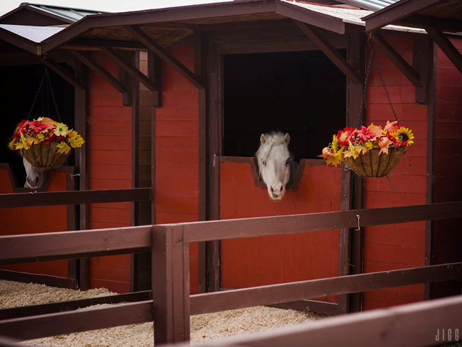 STABLE STYLE: Zo stylish heb je een ponystalletje nog nooit gezien