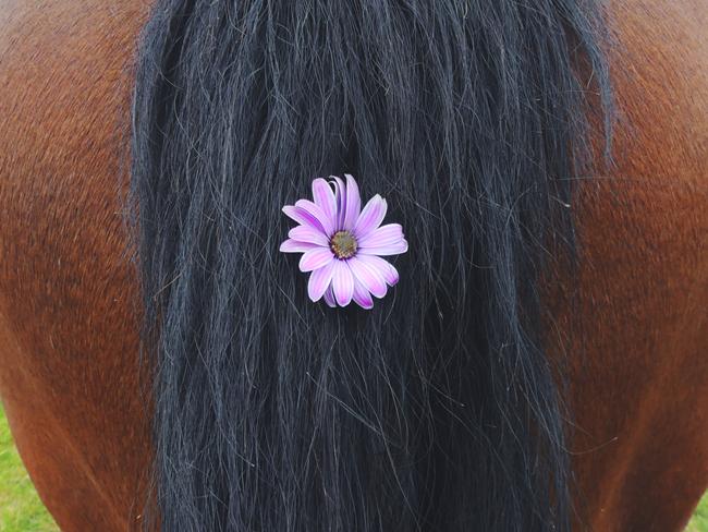 FUNNY: 7x hoe paardeneigenaren over het voorjaar dachten versus de bittere werkelijkheid (+winactie!)
