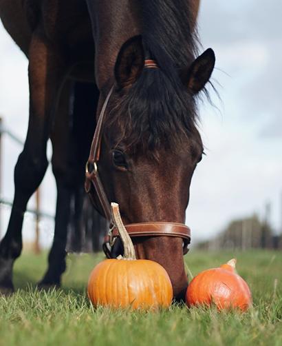 paard herfst detox