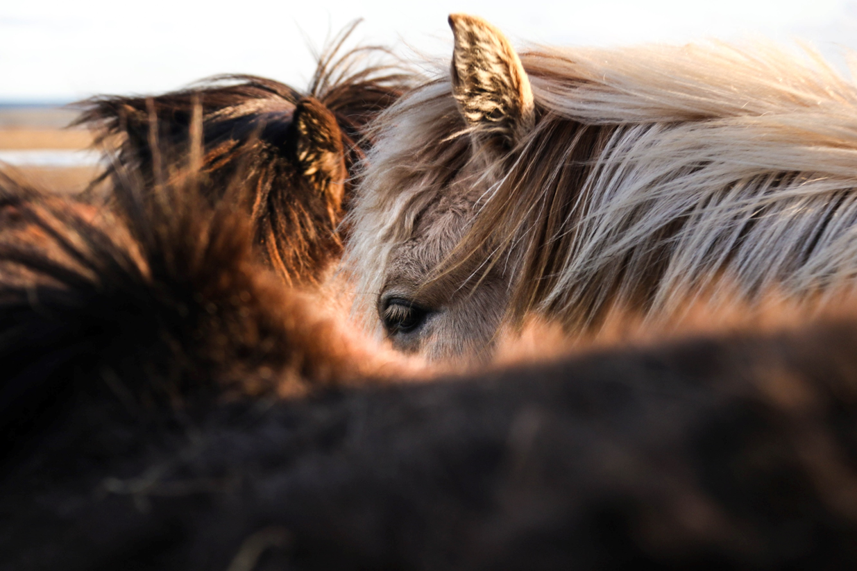 tips jeuk paard