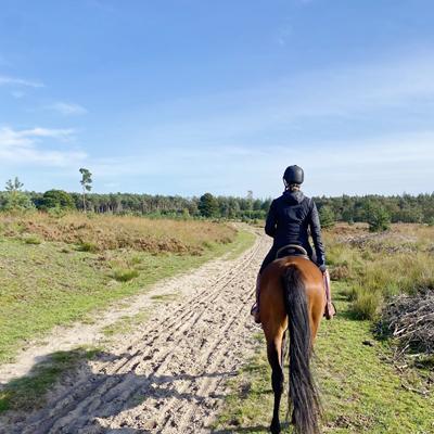 paardenvakantie