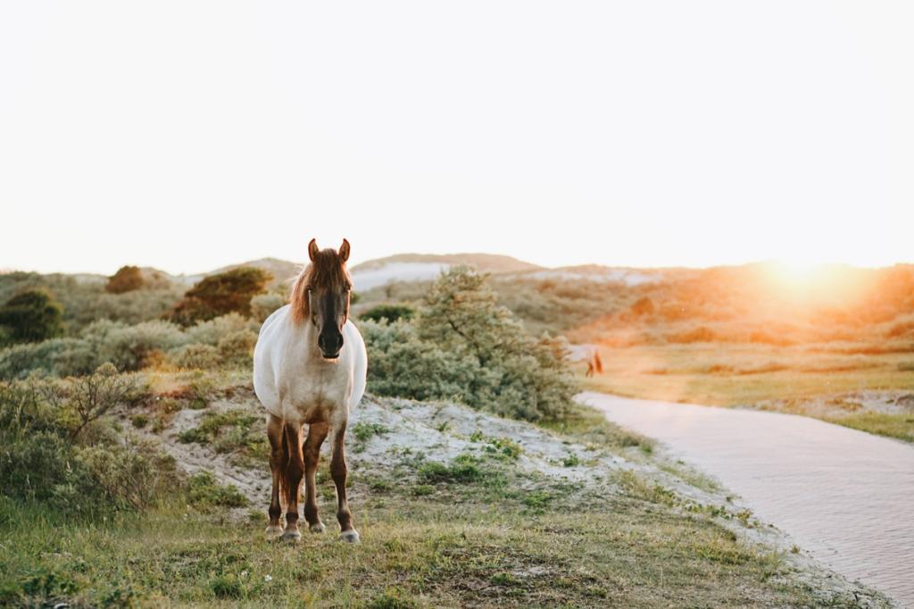 ecohippique duurzaam paarden