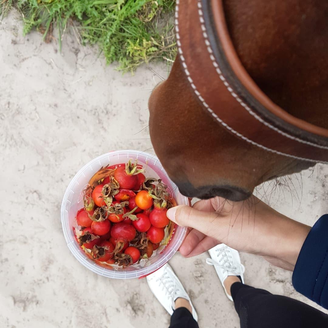 rozenbottels paarden